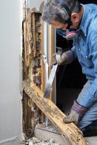 Termite Detection
